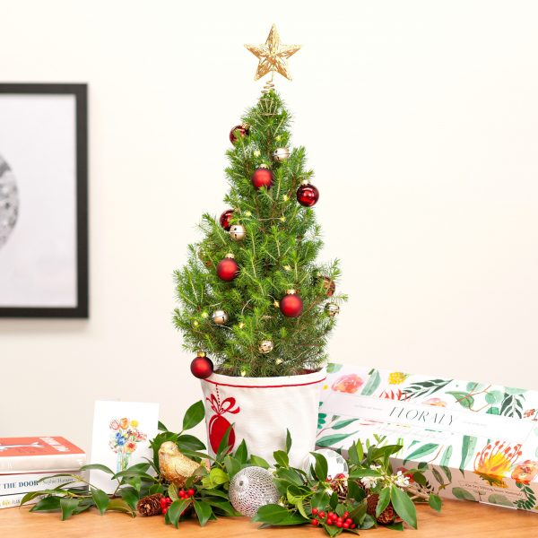 What Type of Christmas Trees Are Popular In Australia